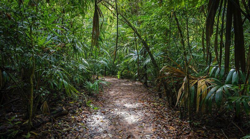 Men's World: Dżunga